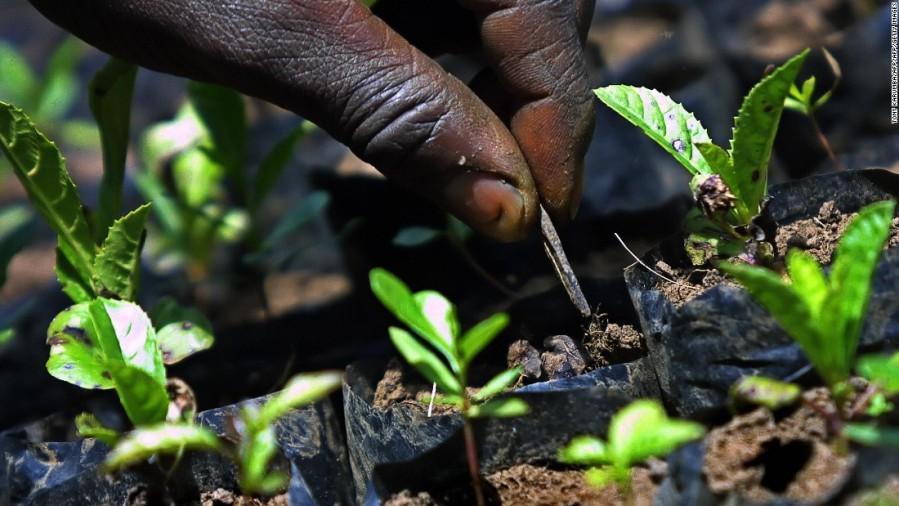 planting ggw