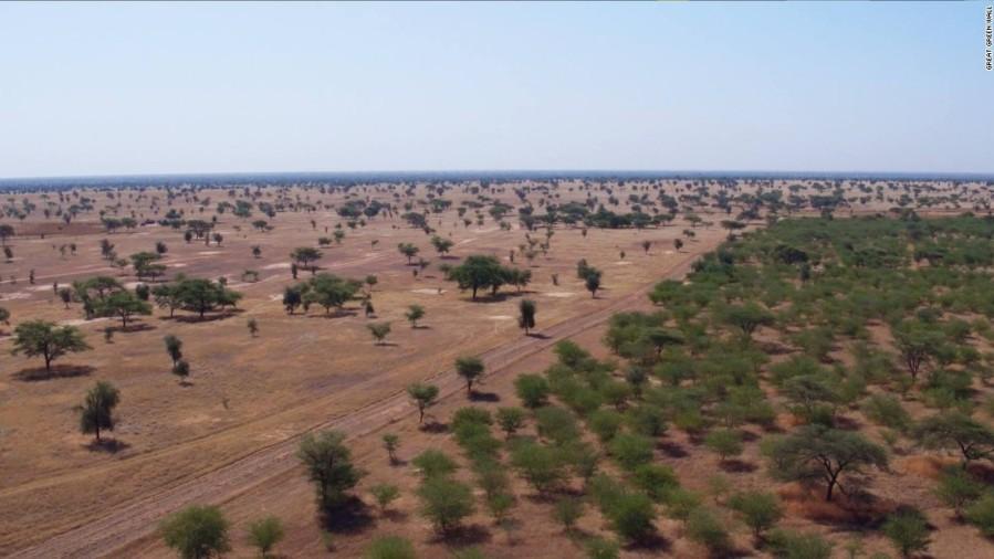 trees ggw